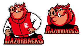 Razorback school mascot Royalty Free Stock Photos