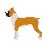 Razza del cane del pugile Immagine Stock Libera da Diritti