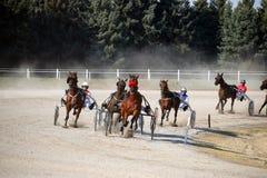 Razza dello zampone dei cavalli nella corsa di cablaggio fotografia stock