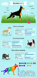 Razza Infographics dei cani Immagini Stock