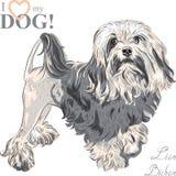 Razza Lowchen del cane di vettore Fotografia Stock