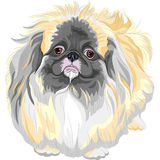 Razza pedigreed di Pekingese del nero del cane di vettore Immagine Stock