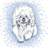 Razza sveglia bianca di Bichon Frise del cane di vettore Fotografia Stock Libera da Diritti
