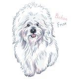Razza sveglia bianca di Bichon Frise del cane di vettore Fotografia Stock