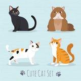Razza sveglia dei gatti Immagini Stock Libere da Diritti