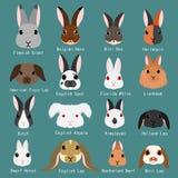 Razze dei conigli messe illustrazione di stock