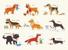 Razze del cane Cani di funzionamento Fotografia Stock