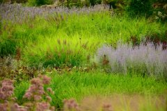 RBG& x27; сад утеса s новый Стоковая Фотография