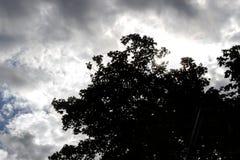 Árbol Fotos de archivo