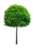 Árbol aislado Fotografía de archivo libre de regalías