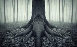 Árbol asustadizo con las raíces grandes en un bosque con niebla Fotos de archivo libres de regalías
