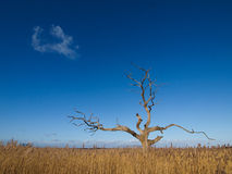 Árbol bajo el cielo azul Fotografía de archivo