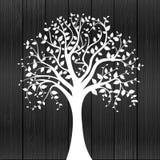Árbol blanco Imágenes de archivo libres de regalías