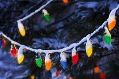Árbol brillantemente coloreado de Hang From Snow Covered Piine de las luces de la Navidad Fotos de archivo libres de regalías