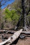 Árbol caido Imagen de archivo libre de regalías