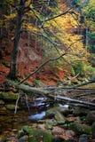 Árbol caido sobre corriente en Autumn Forest Foto de archivo libre de regalías
