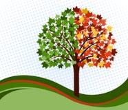 Árbol cambiante de las estaciones Imagenes de archivo