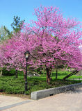 Árbol colorido del flor Foto de archivo libre de regalías