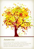 Árbol colorido del otoño con el espacio para su texto Imagen de archivo libre de regalías