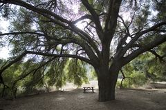 Árbol con el banco Imagen de archivo