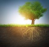 Árbol con las raíces Imagen de archivo