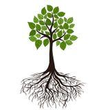 Árbol con las raíces Fotos de archivo libres de regalías