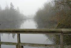?rbol de abedul en la niebla foto de archivo libre de regalías