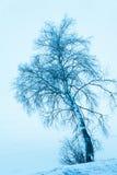 Árbol de abedul solitario del invierno, tono azul Foto de archivo