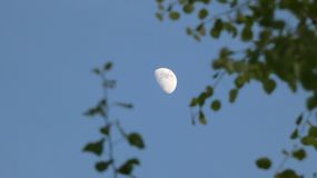 ?rbol de abedul y espino Beith y Huathe debajo de una luna de la primavera en Inglaterra 2 foto de archivo libre de regalías