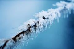 Árbol de abeto congelado Foto de archivo libre de regalías