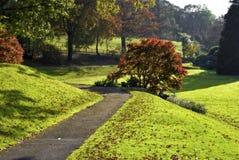 Árbol de Acer en otoño Fotos de archivo libres de regalías