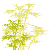 Árbol de bambú Foto de archivo