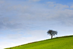 árbol de la energía en la colina Fotos de archivo libres de regalías
