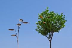 Árbol de la linterna y de mandarín Foto de archivo libre de regalías