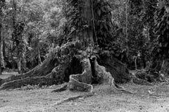 Árbol de la selva Foto de archivo