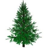 Árbol de navidad descubierto Foto de archivo
