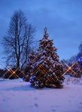 Árbol de navidad en la noche Imagenes de archivo