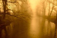 Árbol de oro del otoño Fotografía de archivo libre de regalías