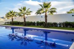 Árbol de Plam y piscina Fotos de archivo
