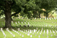 Árbol de roble en un cementerio militar Foto de archivo libre de regalías