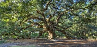 Árbol de roble mágico del ángel, SC de Charleston Imagen de archivo