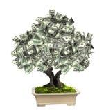 Árbol del dinero con los billetes de banco del dólar Foto de archivo