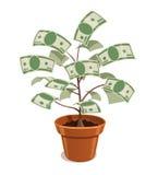 Árbol del dinero con los dólares en pote Foto de archivo libre de regalías