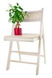 Árbol del ficus de los bonsais en silla de jardín del crisol de flor Fotos de archivo libres de regalías