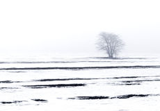 Árbol del paisaje del invierno Imágenes de archivo libres de regalías