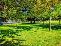 Árbol del parque Fotografía de archivo libre de regalías