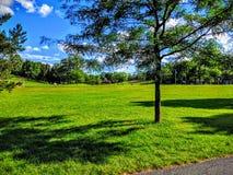 Árbol del parque Fotografía de archivo