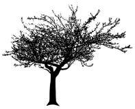 Árbol del vector Imágenes de archivo libres de regalías