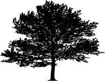 Árbol del vector Fotografía de archivo libre de regalías