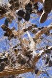Árbol del zapato de Nevada Fotografía de archivo